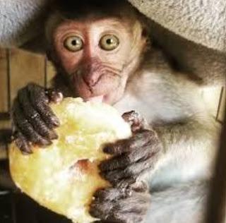 Filter Monyet Ig