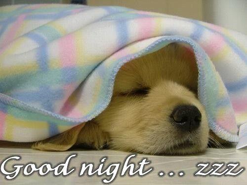 Dog Sleeping, Funny Good Night Photo