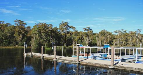 Wakulla Springs Florida Swamp