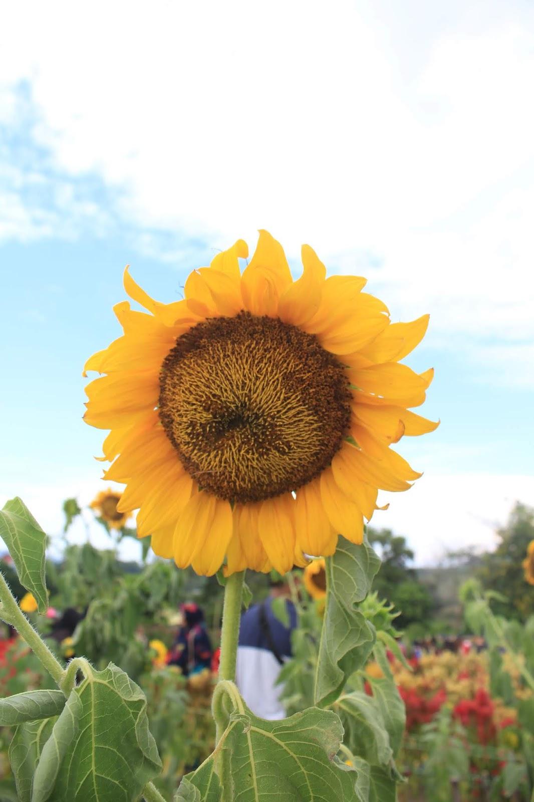 Explore Celosia Garden Taman Bunga Hits Instagramable Di Tanjung