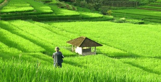 Keadaan Sosial dan Ekonomi Negara Laos