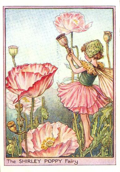 Live, Life, Love and Laughter: Flower Fairies