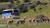 Desde Santiago de Chile a Tierra del Fuego abordo de un Neoplan Cityliner