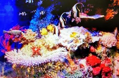 PASSO-A-PASSO. Mosaico. CDs, cacos de vidro, espelho, cerâmica, azulejos, vidro, cerâmica, conchas, pastilhas, tampas de garrafa