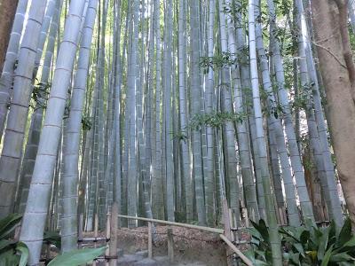 報国寺・竹の庭