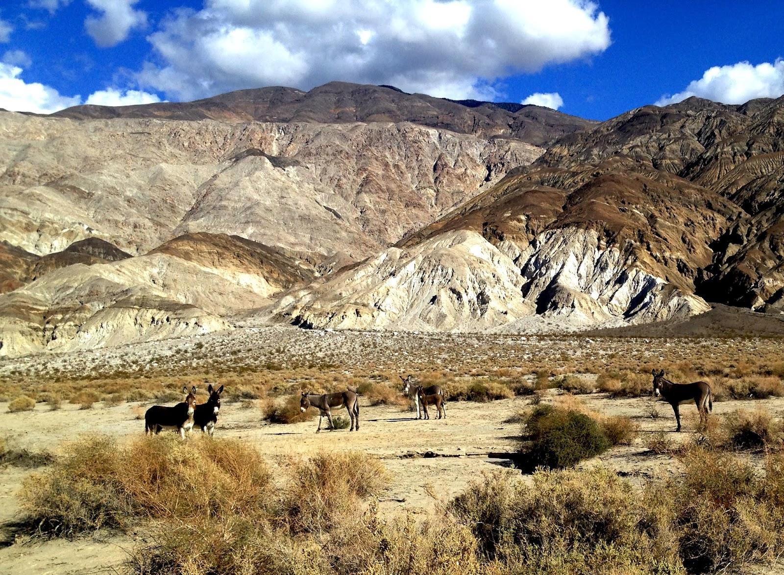 Death Valley Dual Sport 2013