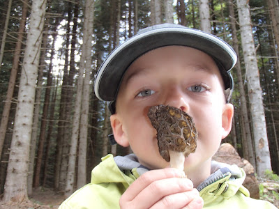 grzyby 2017, grzyby w maju, grzyby na Orawie, ostatnie smardze, pożegnanie grzybów wiosennych, przygotowania do wakacji