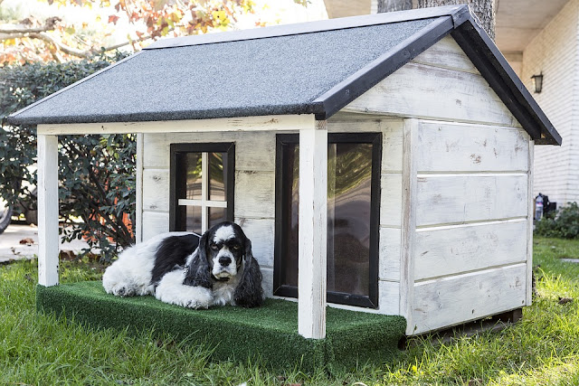 Dog House Building And Buying Guide