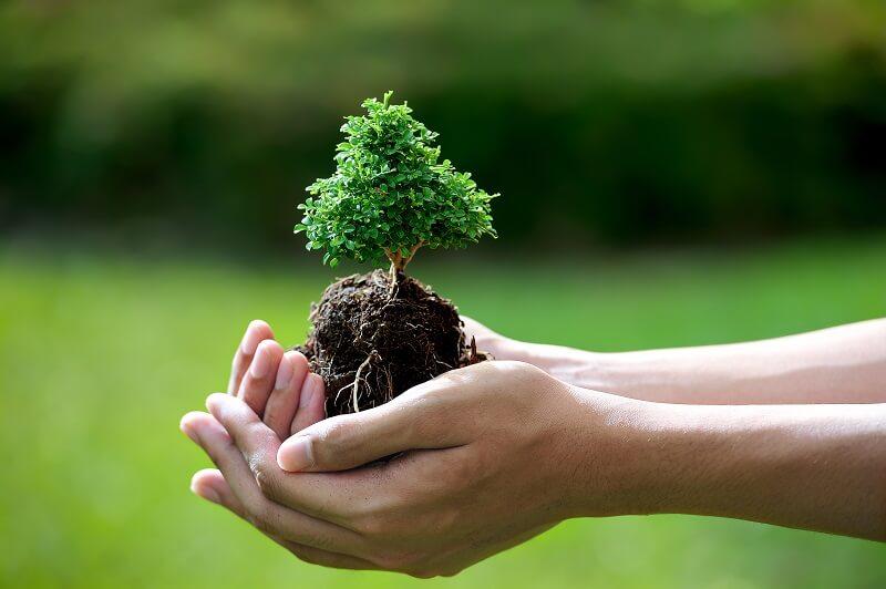 Yêu thiên nhiên, môi trường là một trong những tố chất cần thiết để theo đuổi ngành Khoa học môi trường.