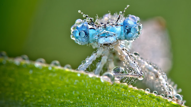 Shine Hd Wallpapers Dragonfly