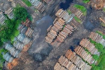 Short Paragraph on Deforestation