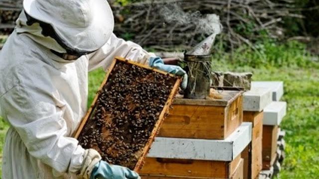 Ένα Κέντρο Μελισσοκομίας στην Λάρισα