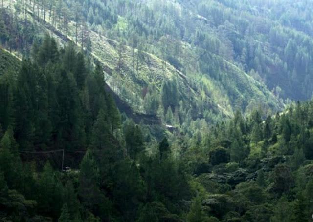 Salah satu sudut Kawasan Ekosistem Leuser (ANTARA)