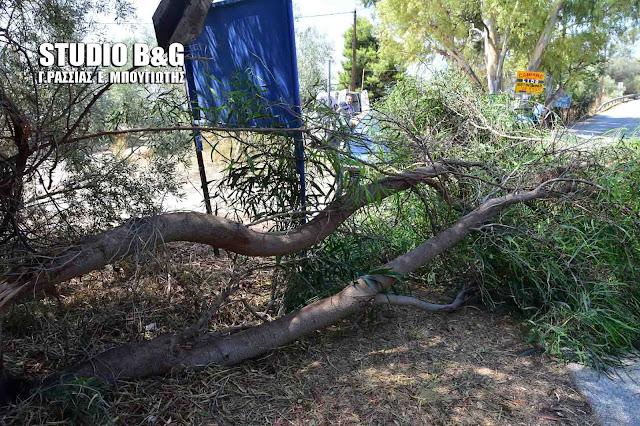 Αργολίδα: Πτώση δέντρου σε αυτοκίνητο στην Αρχαία Ασίνη