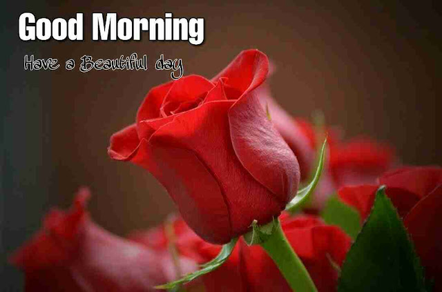 Awesome good morning image for her with red rose flower