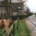 Minha vida de AuPair na Holanda (parte 2)