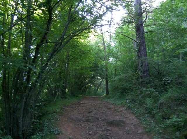 Camí de Sant Antoni, per boscos ...