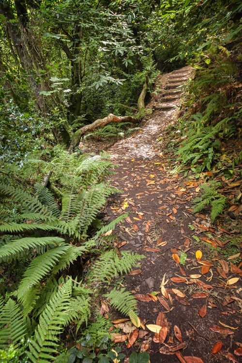 Culbone Wood steps and ferns in Exmoor National Park by Martyn Ferry Photography