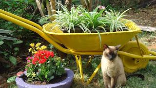 Resultado de imagem para carrinho de pedreiro com flores