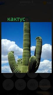 389 фото растет большой кактус в форме дерева 8 уровень