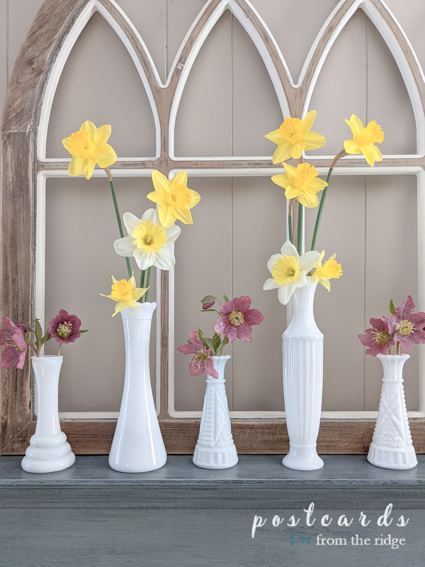 yellow daffodils and pink lenten roses in vintage white milk glass vases