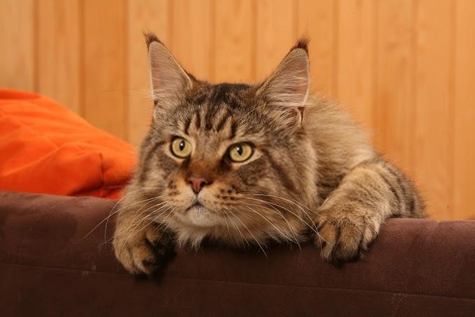 Kitten Having Seizures - Causes, Treatment and Warnings