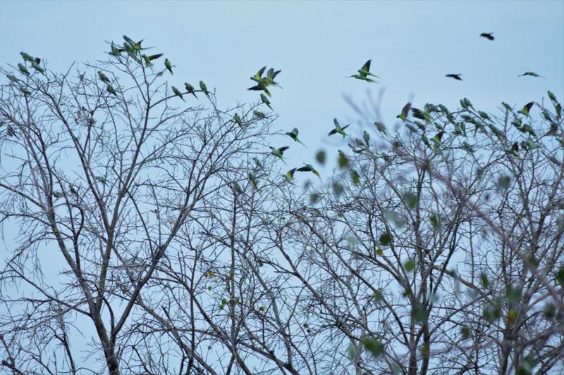 """Bird or Birds"" - Photography Contest Entry by Ajay Parikh"