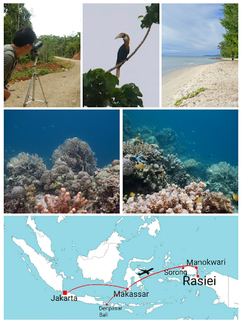 visitors can enjoy swimming, snorkeling, and birdwatching or wildlifewatching in Wondama regency of Indonesia