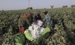 6-million-cotton-bundle-production