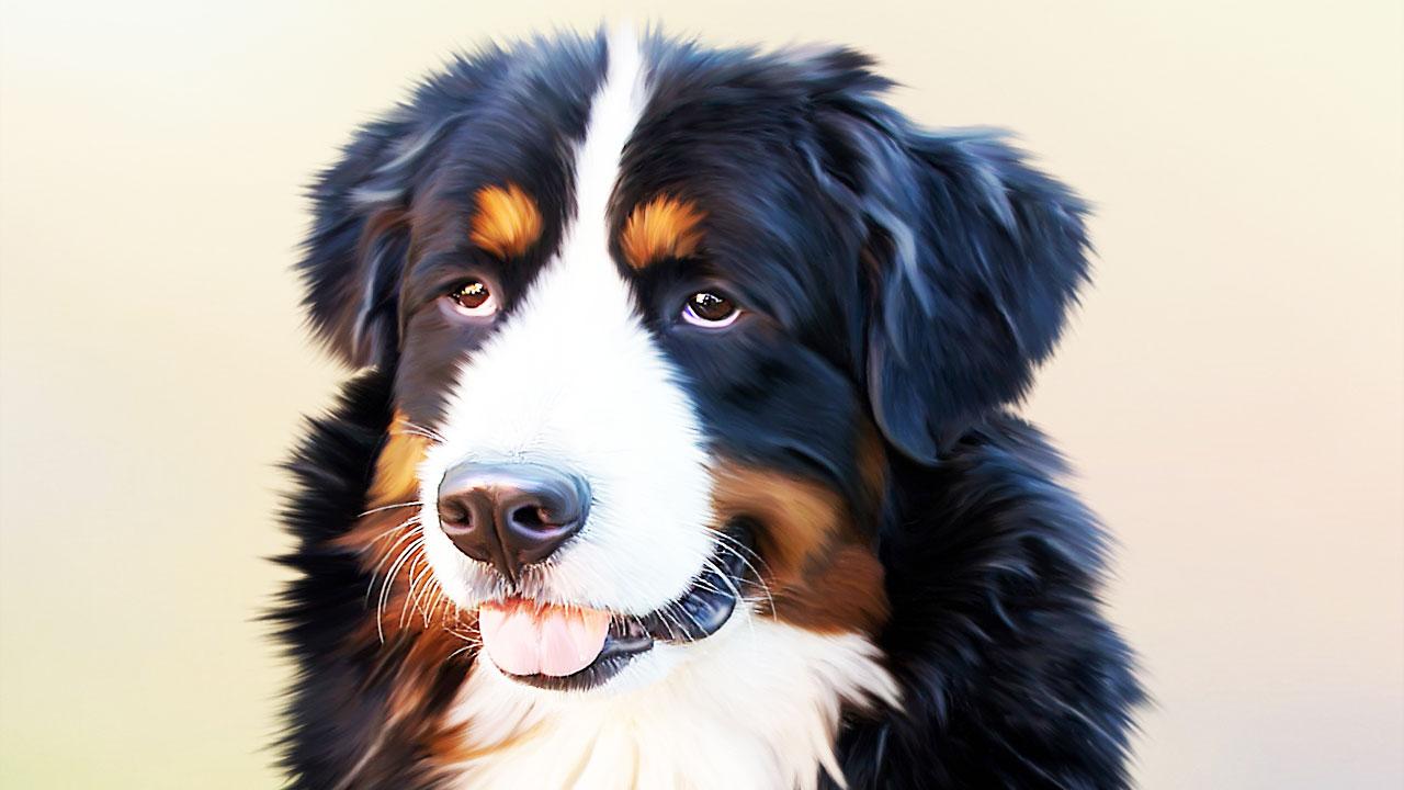 Meet Service Dog Owner