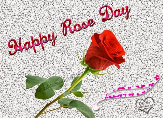 rose day wallpaper 2015 latest