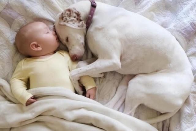 Эту собаку спасли и она боялась всех, кроме него… Этот 11-месячный малыш возродил в ней веру в людей!