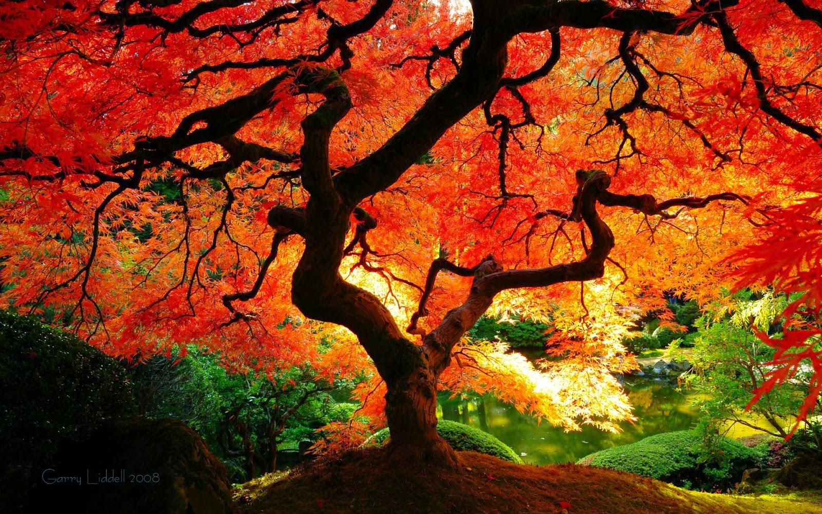Autumn Wallpaper 1080p