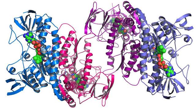 Proteinas y biologia