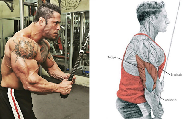 The 5 Common Tricep Training Mistakes