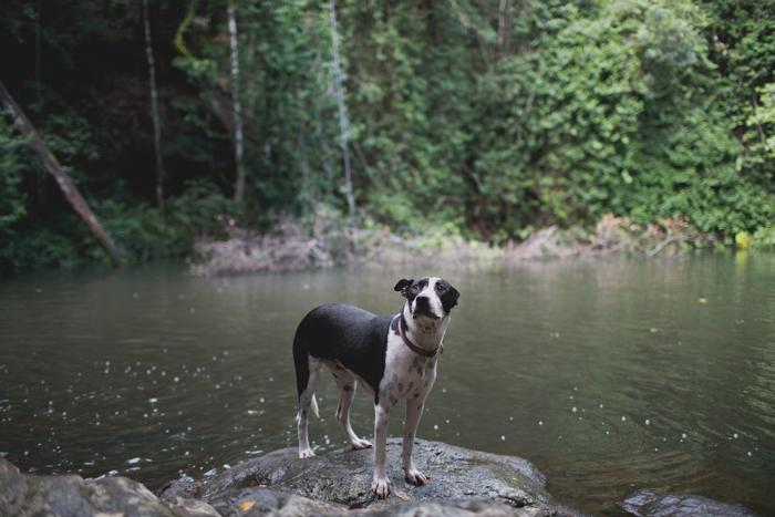 nature dog
