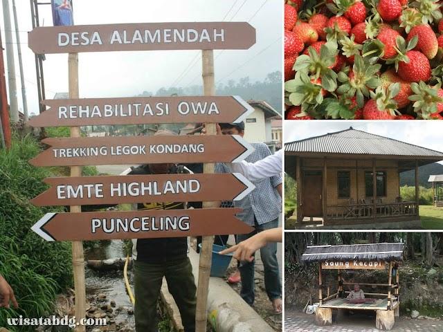 Desa Wisata Alamendah, Destinasi Agrowisata dengan Fasilitas Lengkap di Rancabali