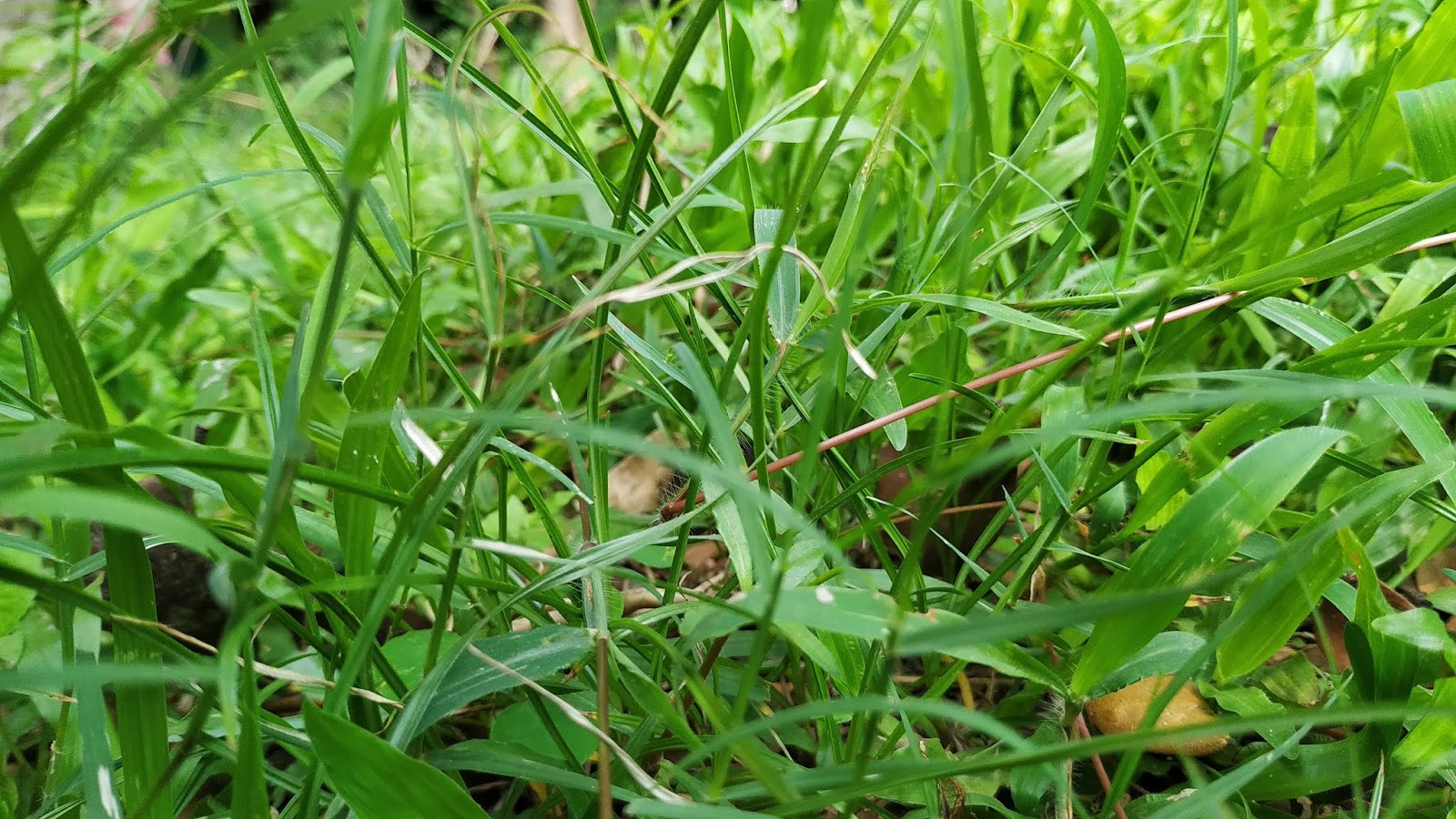 Nature green grass wallpaper Photo - Image HD Download Free