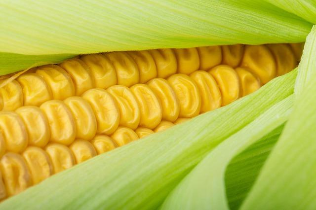 Shih tzu pode comer milho?