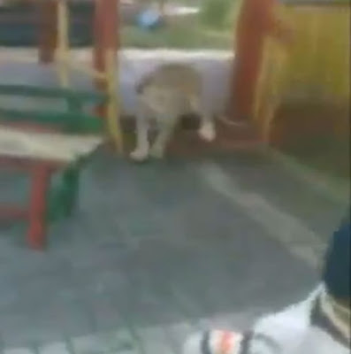 Oh My! Families Watch as Escaped Lion Attacks a Little Boy