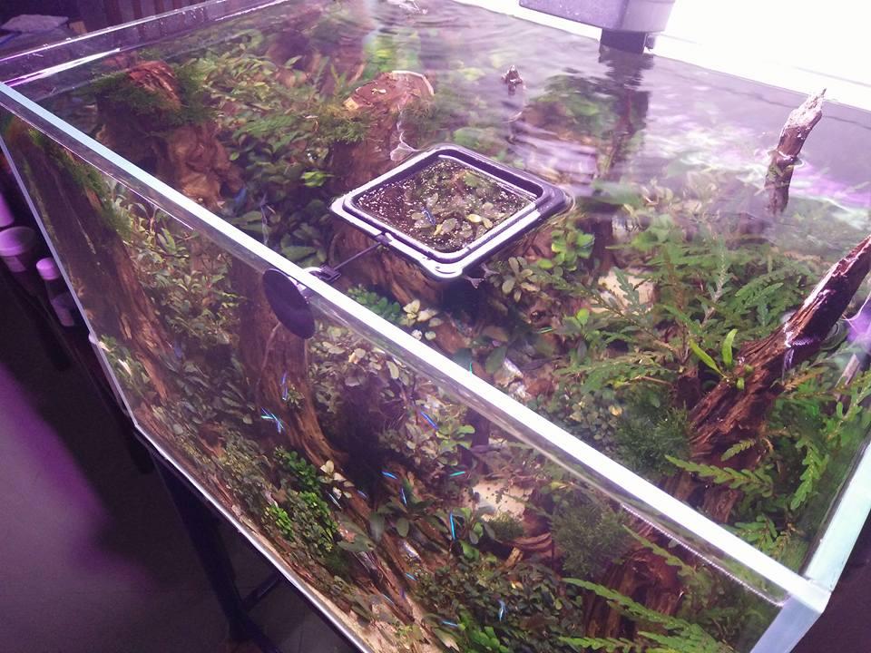 Vòng giữ thức ăn cho cá - giúp thức ăn nằm yên một chỗ - rất thích hợp cho bể thủy sinh