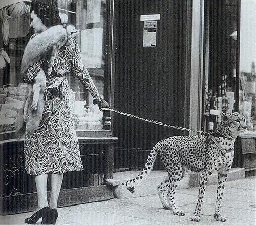 Actriz Phyliss Godon y su guepardo