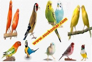 تقليم أو قص أظافر الطيور
