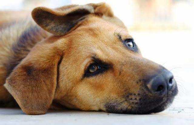 Άρτα: Ανοικτό όλη την εβδομάδα το καταφύγιο αδέσποτων του Δήμου Αρταίων για υιοθεσίες ζώων