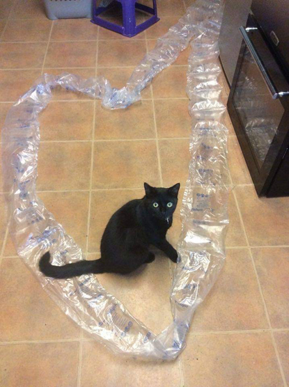 black cat playing with some plastic packaging on a tiled floor