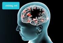 Bağırsakların Beyin ile ilişkisi Nedir?