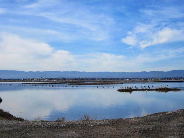 Bird watching Bay Area: SF Bay Water