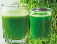 गेहूं  के ज्वार का जूस खाली पेट प्रतिदिन पिए- Drink Wheatgrass Juice on an empty stomach every day