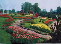 tulipani a Flor61