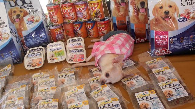 prada chihuahua, monge, special dog,